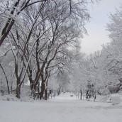 Zabezpieczenie drewna przed zimą