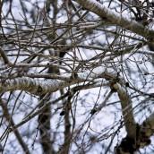 Wybieramy rozdrabniacz do gałęzi